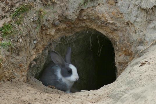 Можно ли вырастить зайца в домашних условиях